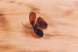 Cut film negative and flower stem